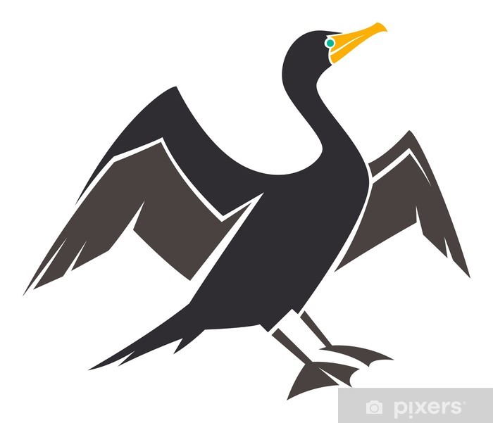 Poster Doppio crestato Cormorano - Uccelli