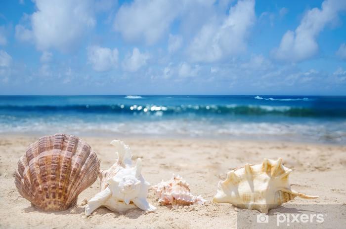 Fototapeta winylowa Muszle na plaży - Woda