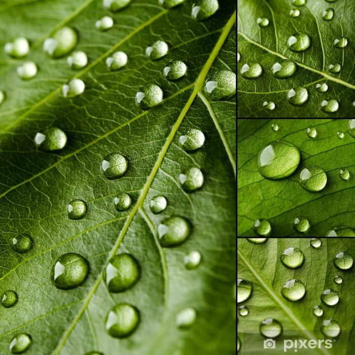 Poster Grüne Blätter Collage - Pflanzen