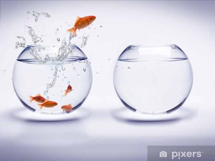 Fototapeta winylowa Akwarium poissons rouges - Sukces i osiągnięcia