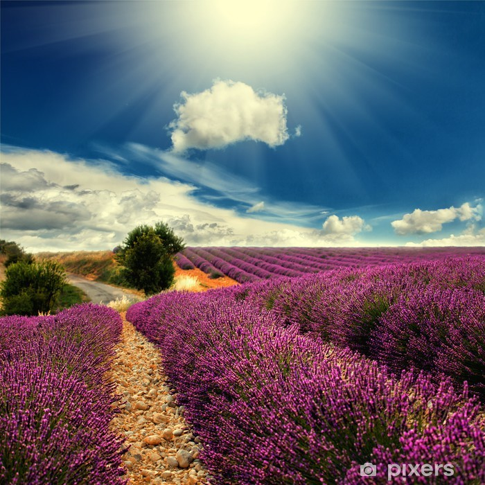 lavender field Pixerstick Sticker - Themes