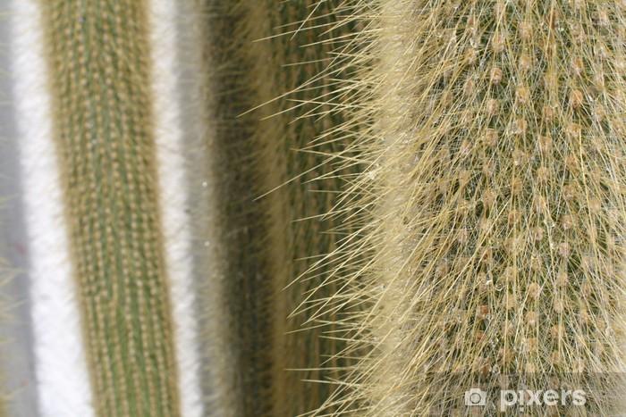 Carta Da Parati Pelosa Rosa : Carta da parati cactus peloso u pixers viviamo per il cambiamento