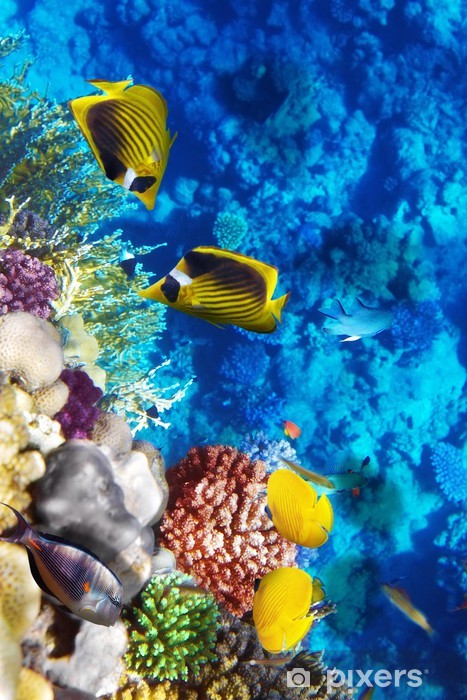 Mural de Parede em Vinil Coral and fish in the Red Sea. Egypt, Africa. - Temas