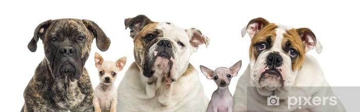 Papier peint vinyle Gros plan sur un groupe de chiens, isolé sur blanc - Mammifères