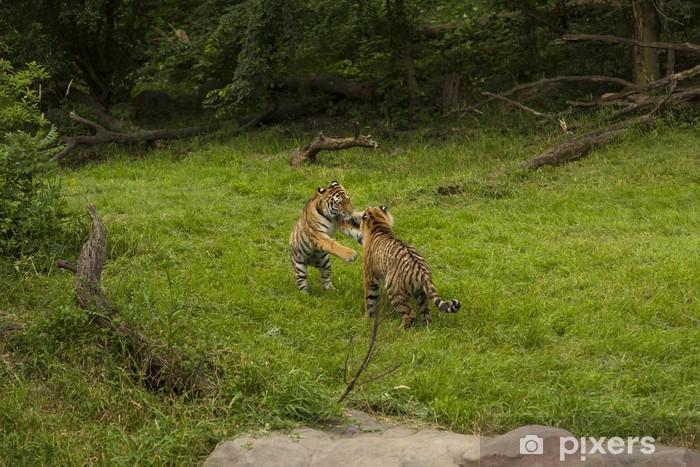 Nálepka Pixerstick Amur tigers - Savci