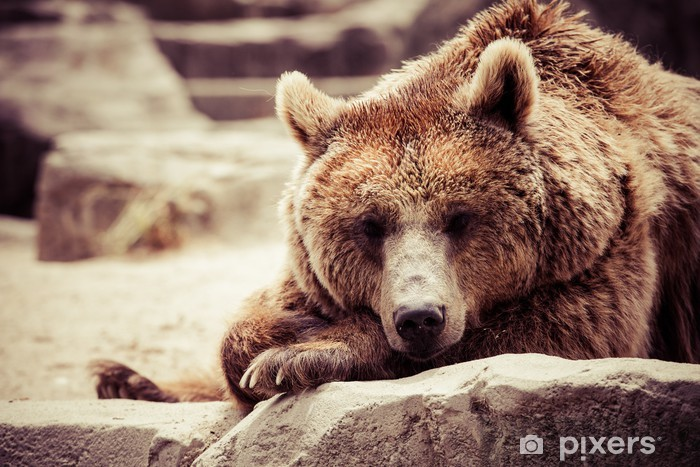 Sticker Pixerstick L'ours brun dans une drôle de pose - Thèmes