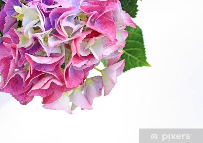 Fototapeta winylowa Piękne kwiaty hydranea bliska - Kwiaty