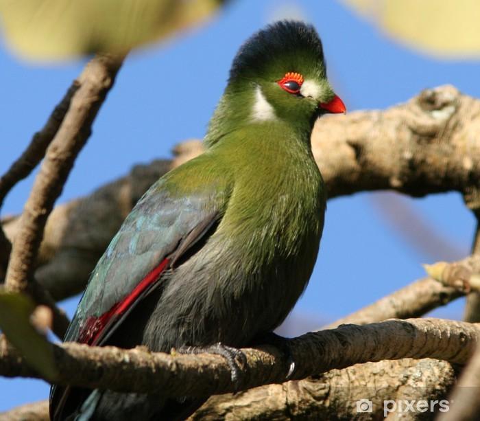 Fototapeta winylowa Touraco - Ptaki