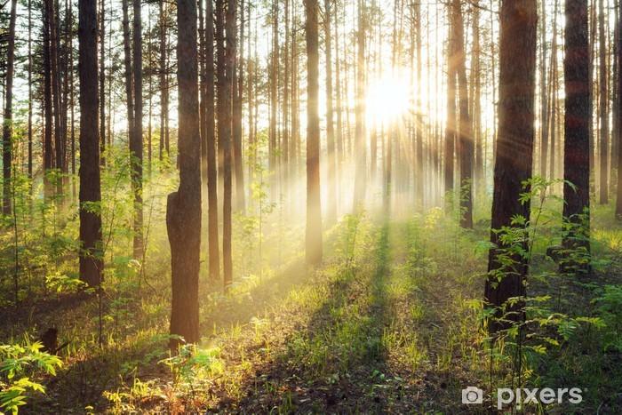 Pixerstick Sticker Zonsondergang in het bos - Thema's
