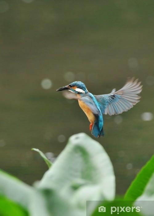 Papier peint vinyle Survoler Kingfisher - Oiseaux