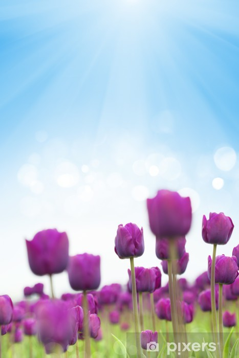 Fototapeta winylowa Wiosenne tulipany - Tematy