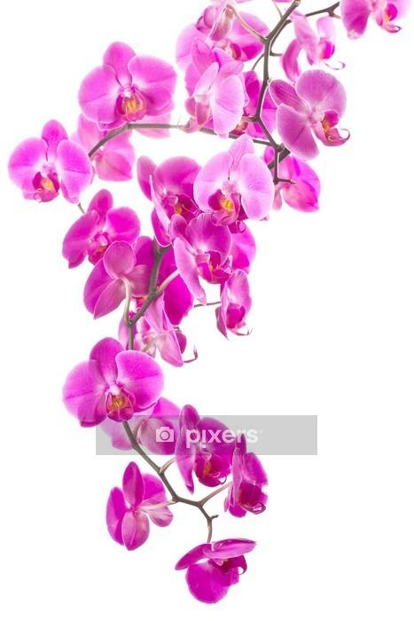 Sticker mural Fleurs rose orchidée - Sticker mural