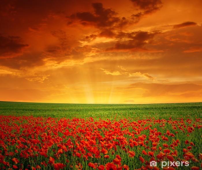 Fototapeta winylowa Zachód słońca nad pole czerwone maki - Tematy