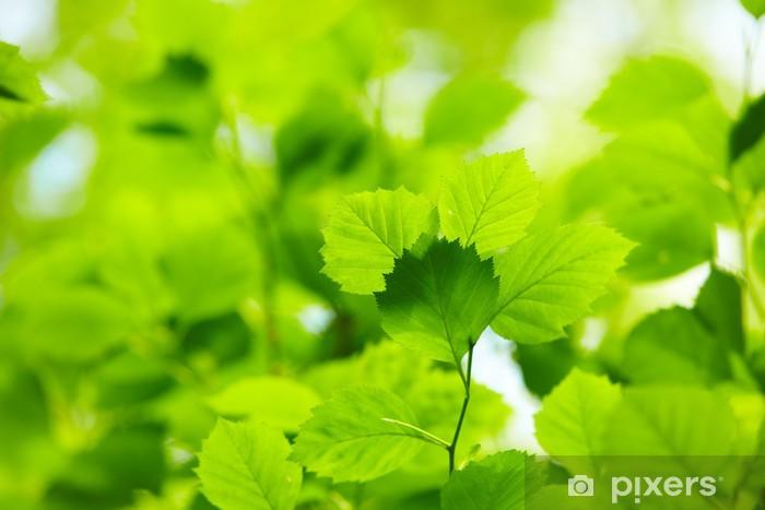 Fototapeta zmywalna Zielone liście - Tematy