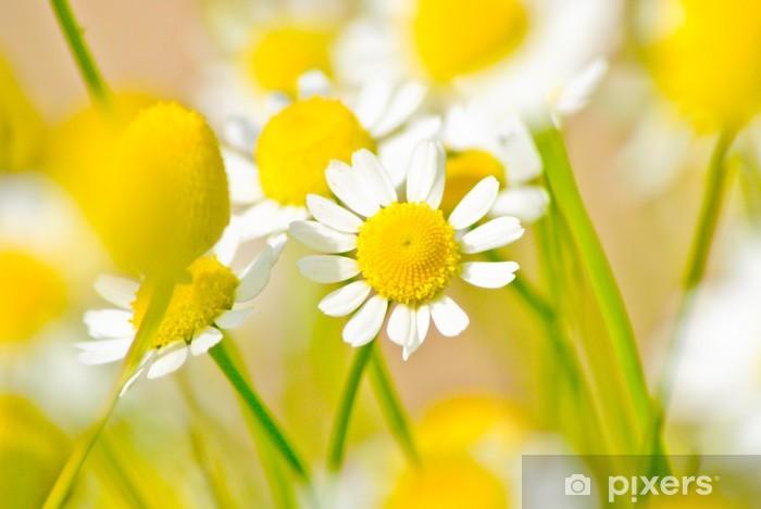 Naklejka Pixerstick Rumianek na łące - Kwiaty