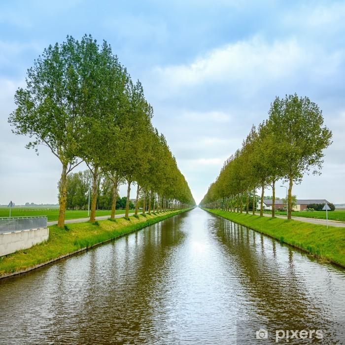 Fototapeta Winylowa Drzewo Wiersze Na Kanale I Refleksji Nad Wodą Niderlandy