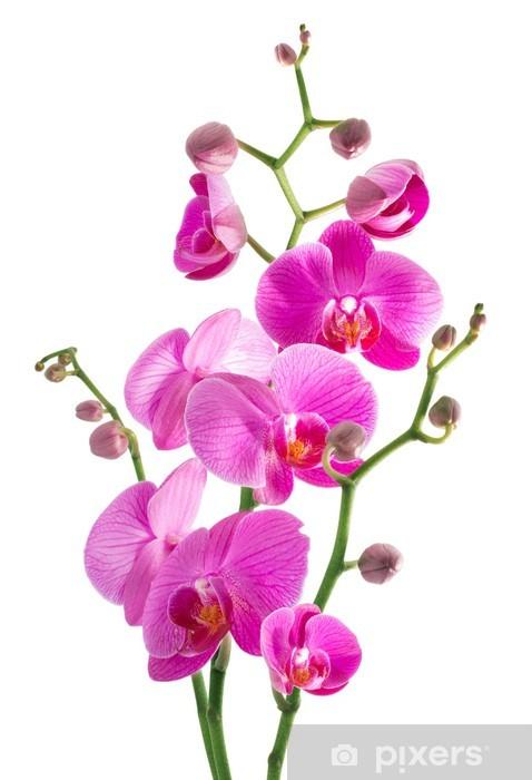 Sticker Pixerstick Fleurs d'orchidée rose sur un fond blanc - Sticker mural