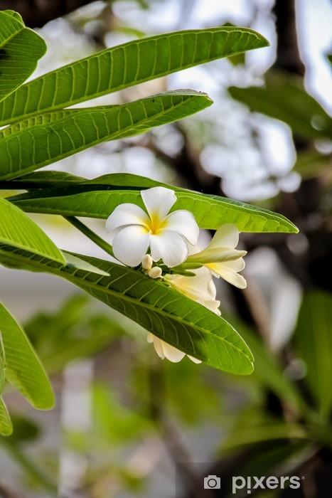 Vinyl Fotobehang Plumeria obtusa - Azië