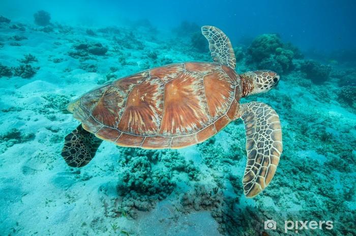 Papier peint vinyle Tortue verte - Récif de corail