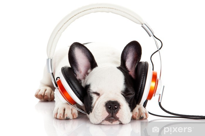 dog listening to music with headphones isolated on white backgro Vinyl Wall Mural - Mammals