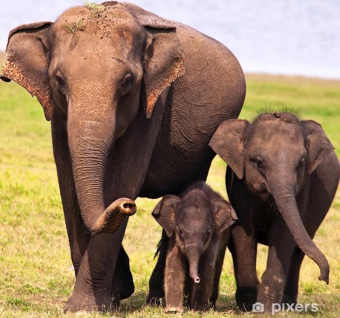 Plakát Tři sloni - Témata