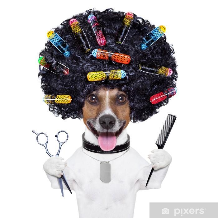 Plakat Pies fryzjer z lokówek - Naklejki na ścianę