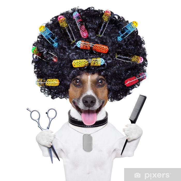 hairdresser dog with curlers Vinyl Wall Mural - Wall decals