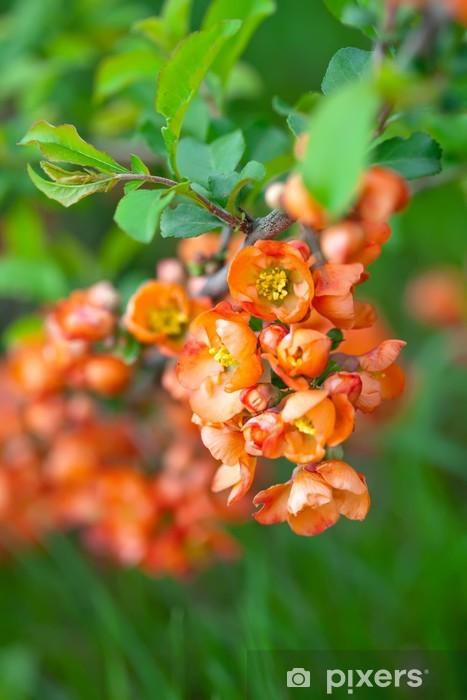 Naklejka Pixerstick Pigwa gałęzi drzewa z kwiatami - Pory roku