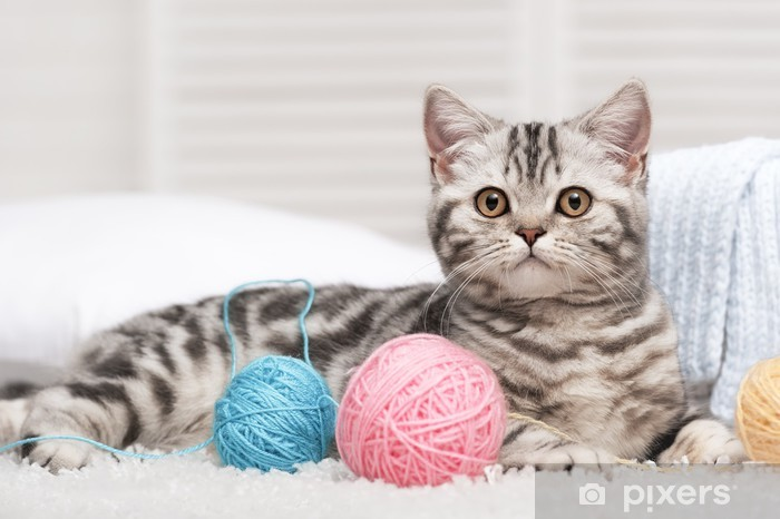 Cat with a ball of yarn Pixerstick Sticker - Themes