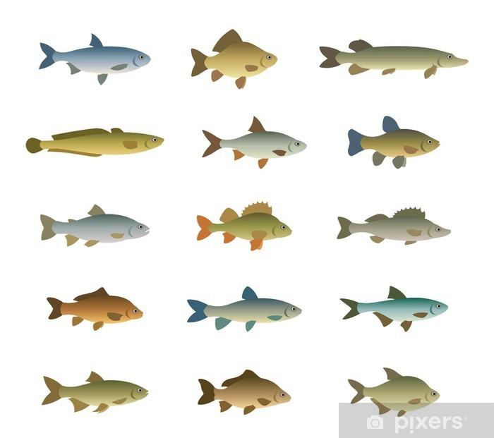 Fototapeta winylowa Zestaw ryb - Zwierzęta żyjące pod wodą
