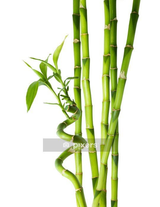Wandtattoo Bambus - sechs Stiele - Wandtattoo