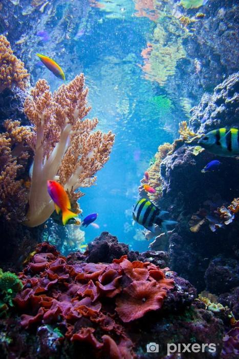 Underwater scene with fish, coral reef Vinyl Wall Mural - Coral reef