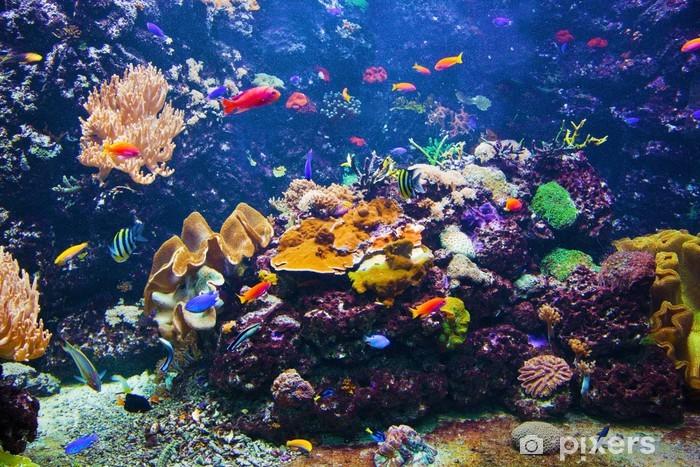 Fototapeta winylowa Podwodne sceny z ryby, rafa koralowa - Rafa koralowa