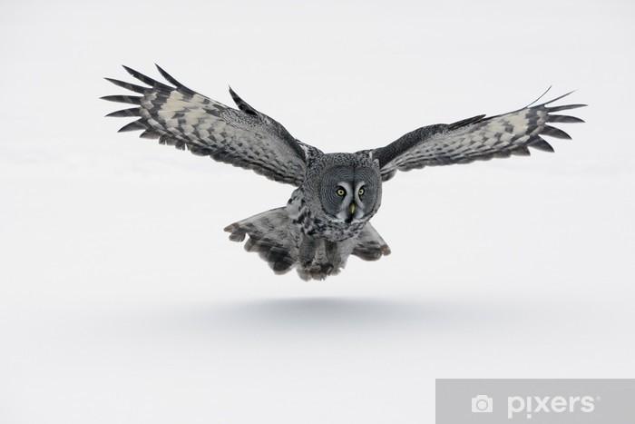 Fototapeta winylowa Great Grey Owl. (Strix nebulosa) - Tematy