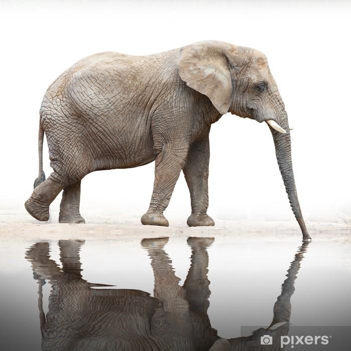 Vinilo para Nevera Sed para beber elefante a partir del estanque. - Temas