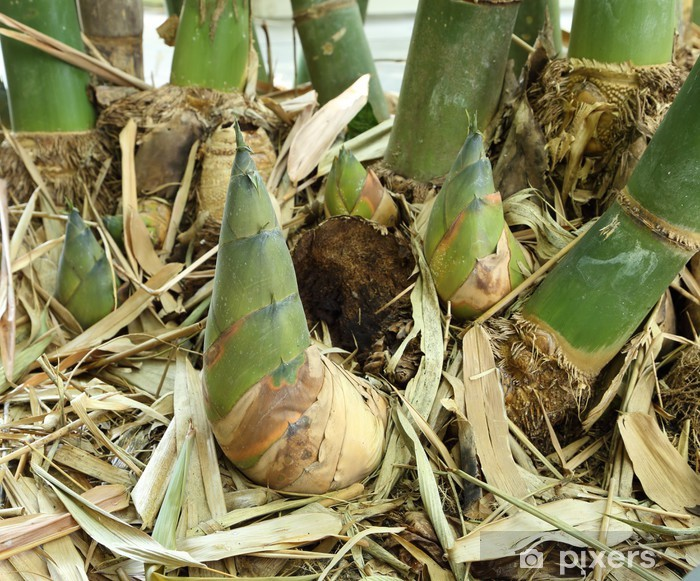 Sticker Pixerstick Tirez de bambou - Plantes
