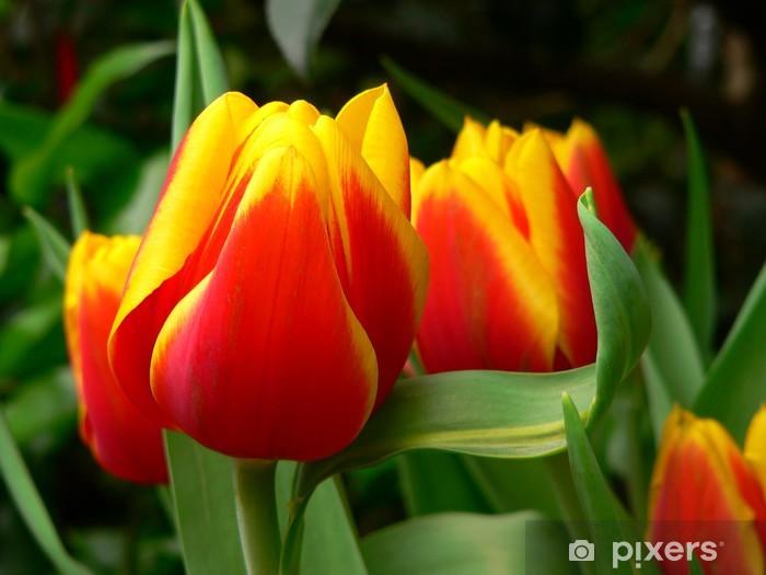 Papier peint vinyle Tulpenimpression - Tulipes