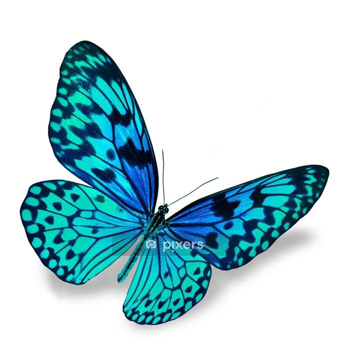 Sticker mural Papillon bleu - Autres Autres
