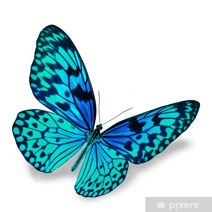 Blue Butterfly Pixerstick Sticker - Other Other