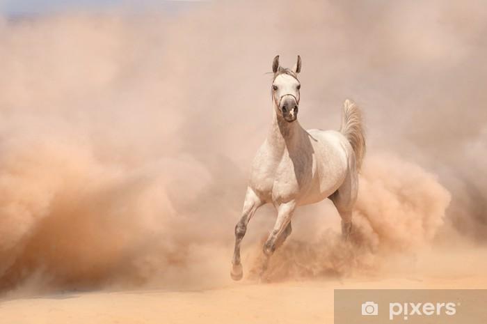 Afwasbaar Fotobehang Paard lopen in de woestijn - Woestijnen