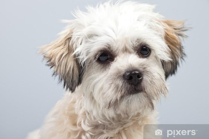 sticker wit boomer hond geïsoleerd tegen de grijze achtergrond