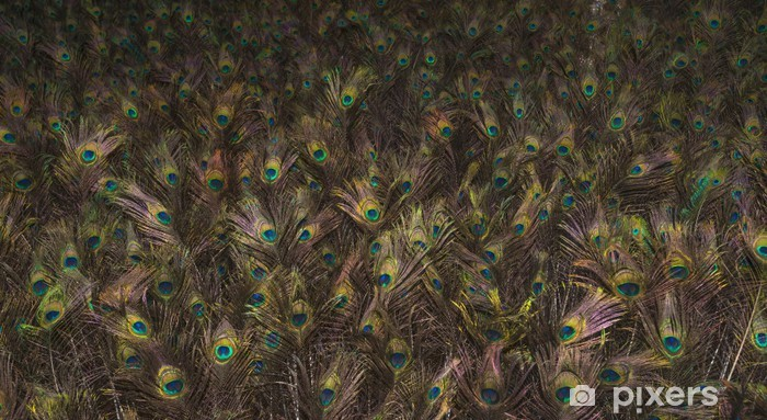 Multitude Of Peacock Feathers Glowing In The Dark Wall Mural