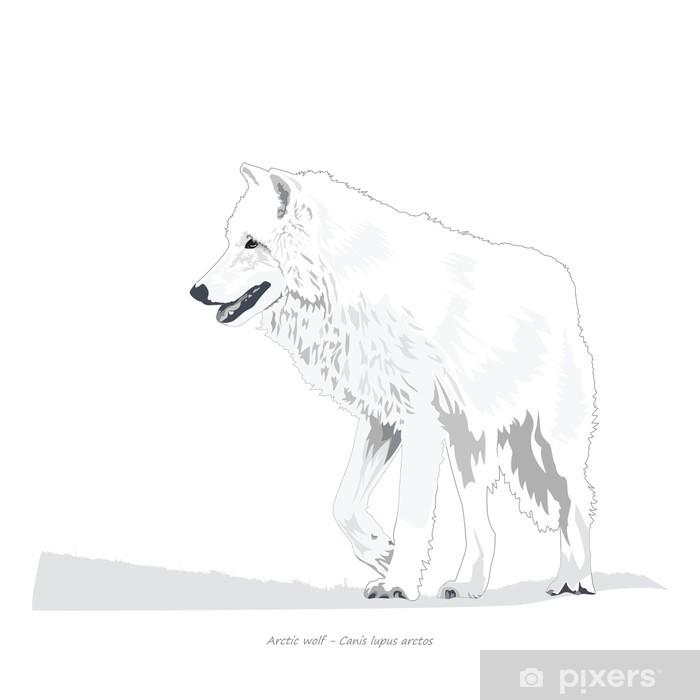 Poster Arctique Illustration Loup - Sticker mural