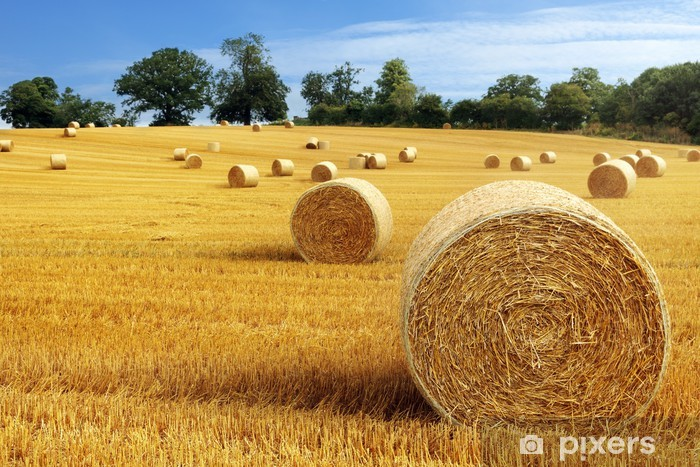 Hay bales in golden field Vinyl Wall Mural - Themes