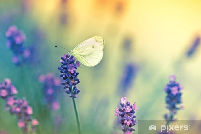 Fototapeta winylowa Motyl na lawendy - Tematy
