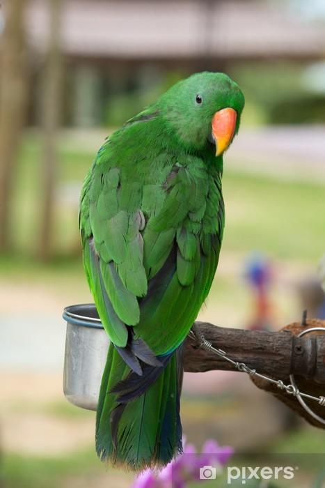 Naklejka Pixerstick Papuga - Tematy