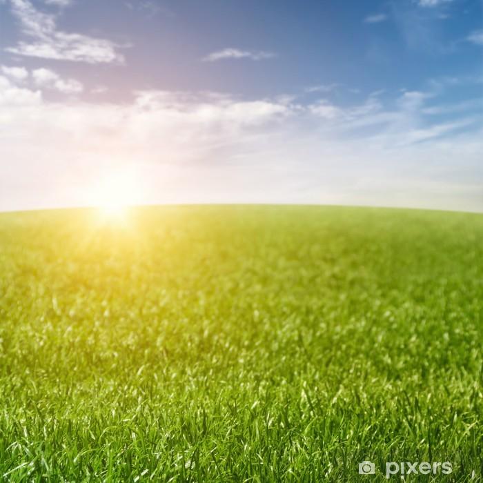 Fototapeta winylowa Trawa pole tła - Krajobraz wiejski