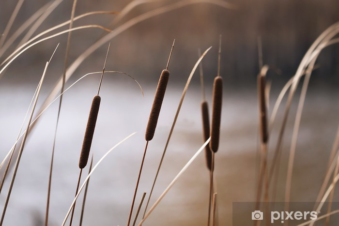 Sticker Pixerstick Roseaux en automne - Saisons