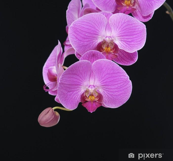 Poster Belle orchidée rose sur fond noir - Thèmes