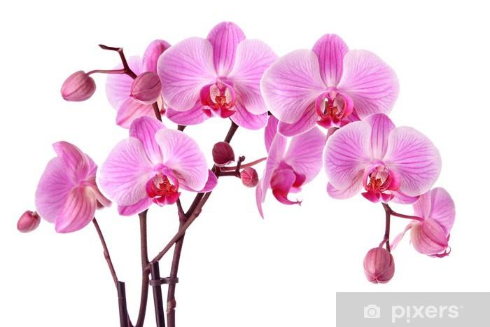 Adesivo Pixerstick Orchidee viola isolati su uno sfondo bianco - Adesivo da parete